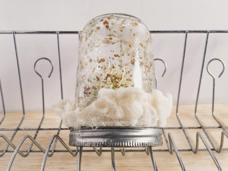 Drying rack for your sprouting jar