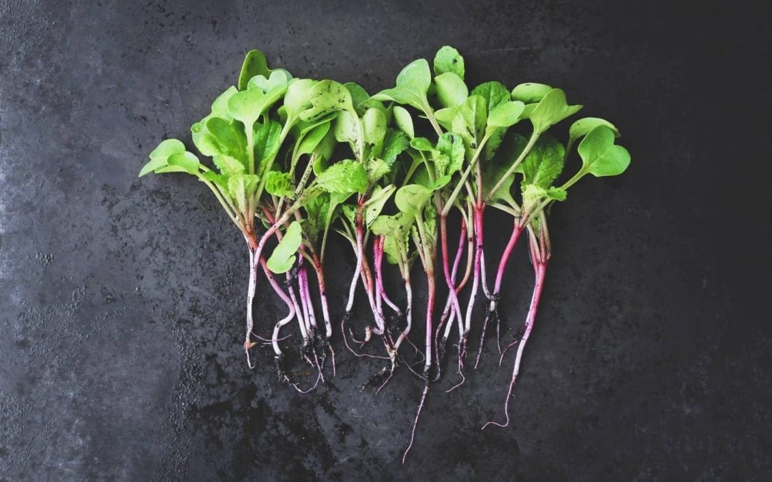 5 Easiest Microgreens to Grow