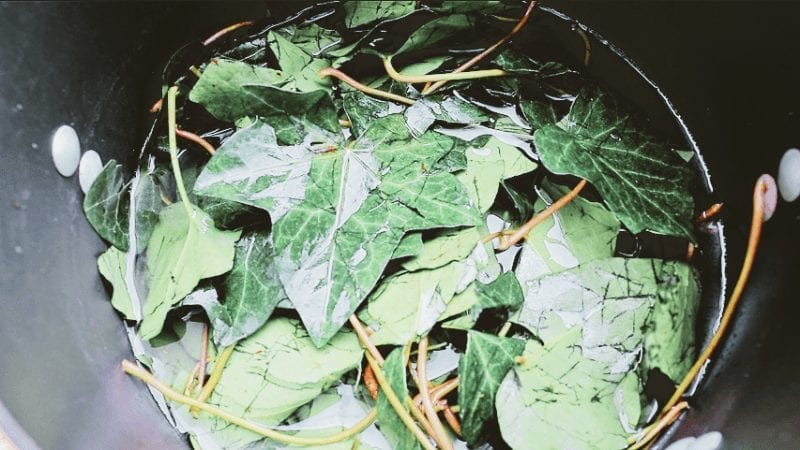Put the leaves in a pan and add 4.5 cups of water.