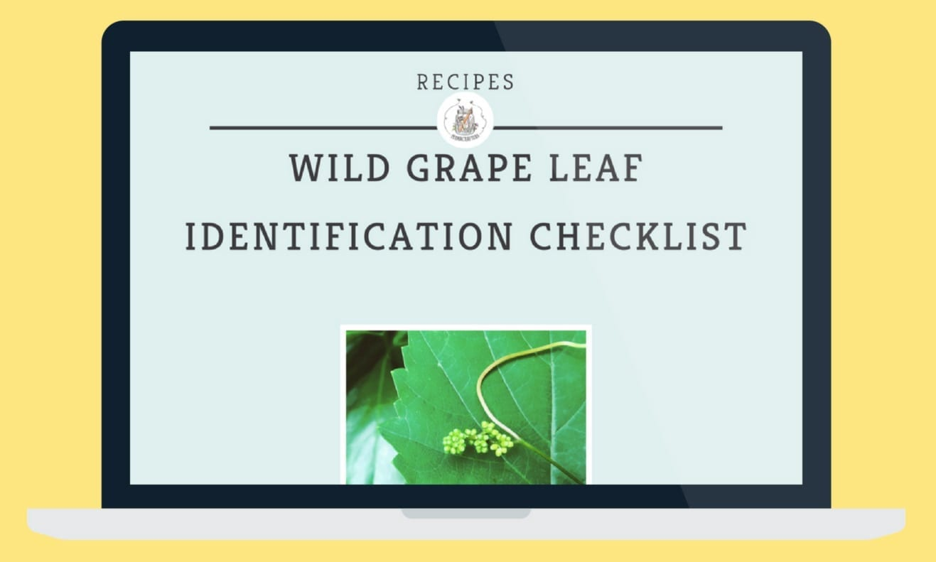 Need some help to identify wild grape leaves?