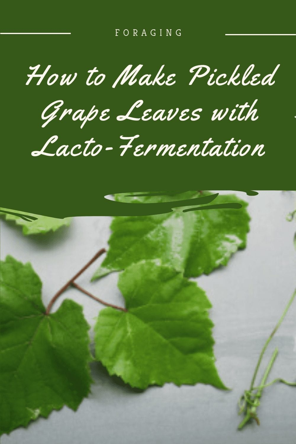How to Make Pickled Grape Leaves with Lacto-Fermentation