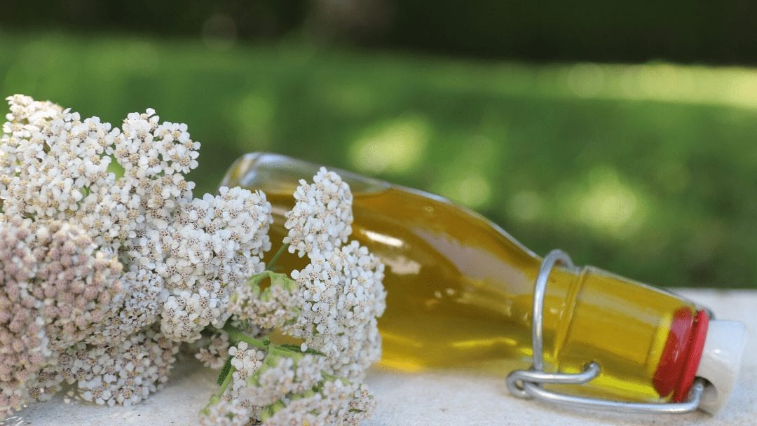 Yarrow Infused Oil for Varicose Veins Treatment